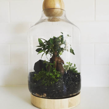 Tall Boy, wooden featured Terrarium