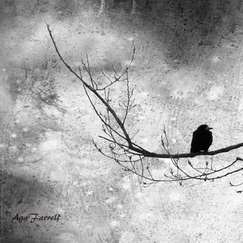 Black and White Photography, Modern, Surreal Art, Large Wall Art, Contemporary Animal Print, Crow on the Tree Branch - Deep Contemplation