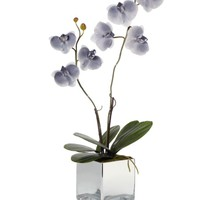 Phalaenopsis Potted Plant - Grey | Potted Plants & Trees | Botanicals & Plants | Accessories | Decor | Z Gallerie