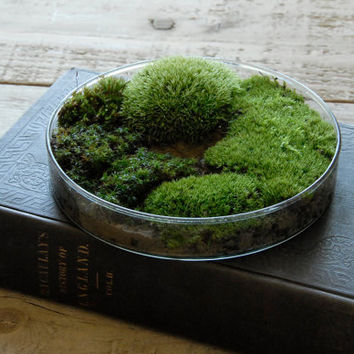 Moss Petri Dish Terrarium - Science Gift for Men & Women, Spring Nature Decor, Easter Gift for Gardeners