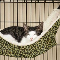 Adorable Hammock Pet Bed for Small Pets