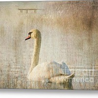 Songs Of A Swan Canvas Print / Canvas Art By Georgiana Romanovna