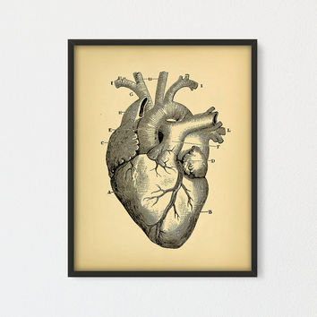 Human Heart Printable, Educational Heart Diagram, Vintage Illustration print, Antique Heart Anatomy, Old Book Illustration, Heart Printable