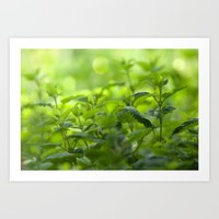 Fresh summer herbs in the garden Art Print by Tanja Riedel