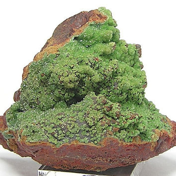 Cuprian Austinite Rare  Green Natural Botryoidal Mineral Specimen from Mexico