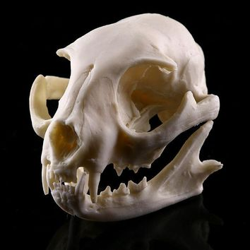 Skull Skulls Halloween Fall Realistic Lucky cat   Model Resin Skeleton Medical Teaching Sculpture White Halloween decoration Calavera