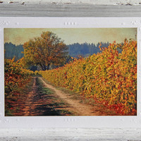 Colorful Vineyard in Fall Photo Greeting Card, Wine Country Image, Autumn Landscape, Sonoma County, Fine Art Photography, All Occasion Card