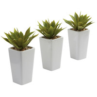 Mini Agave w/White Planter (Set of 2)