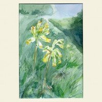 Cowslips in watercolour and mixed media - Primula veris