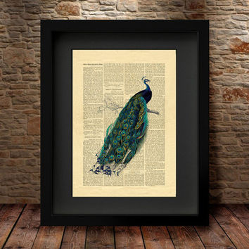 Peacock decor, Peacock wall art,Home Decor, Peacock painting, Peacock poster, Bird illustration, Vintage Page Print, Wall Art Print - 79