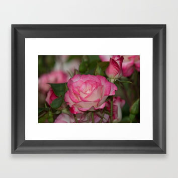 Nicole Rose Framed Art Print by Glenn Franco Simmons