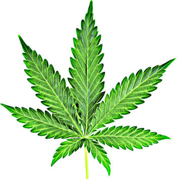 Cannabis Marijuana leaf clip art png clipart pot leaf color Digital graphics Download plants Image art printables