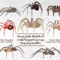 Venomous Spiders Clipart, Arachnid Clipart For Halloween, Black Widow, Brown Recluse, Wolf Spider, Funnel Web Spider, Scrapbooking Spiders