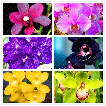 2017 Rare Artificial Orchid flower material real touch soft high quality orchid purple pink green yellow color 200seeds/package
