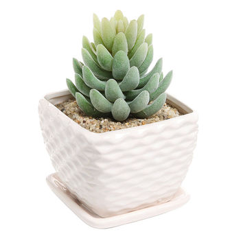 Shop Ceramic Succulent Pots On Wanelo
