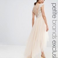 Chi Chi London Petite Lace Scallop Back High Low Midi Dress With Tulle Skirt at asos.com