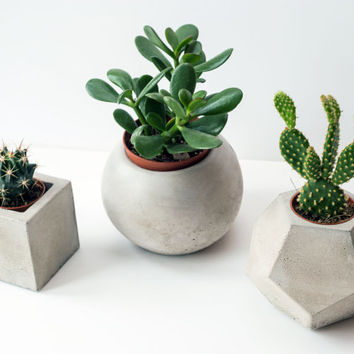 Concrete Planter Trio: Cube, Sphere & Dodecahedron (plants included)