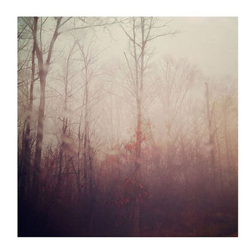 Ethereal Nature Photography, Winter Haze, 8x8 Print, Dreamy Peach Color, Morning Fog, Trees, Autumn Leaves