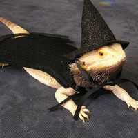 Handmade Felt Bearded Dragon Wizarding Set