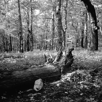 What Happens in the Forest, Black and White Wall Art Print - Many Sizes