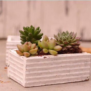 White Wooden Planter Box - Succulent Pot - Kitchen Herb Container