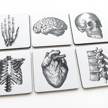 Best Anatomical Brain Products On Wanelo
