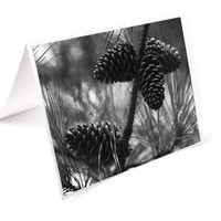 Black and White Christmas Card Set, 8 Winter Holiday Cards, Pine Tree Art Photography