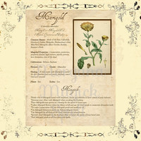 MAGICK HERB MARIGOLD, Digital Download,  Book of Shadows Page, Grimoire, Scrapbook, Spells, White Magick, Wicca, Witchcraft, Herb Magic