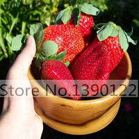 300/bag Giant Strawberry Seeds, Rare, Big as a Peach, Fragaria ananassa L. Maximus Strawberry fruit seeds for home garden