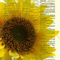 Sunflower Portrait Printed On An Upcycled Dictionary Page From the 1800s, Yellow Flower Art, Dictionary Print, Wall Decor, Mixed Media Art