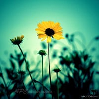 Floral Photography - Teal, Bright Yellow, Yellow, Black - Kitchen Decor, Shabby Chic, Country Chic