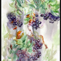 Purple Chokeberry in Watercolor 2009 Painting, 30 x 40 cm