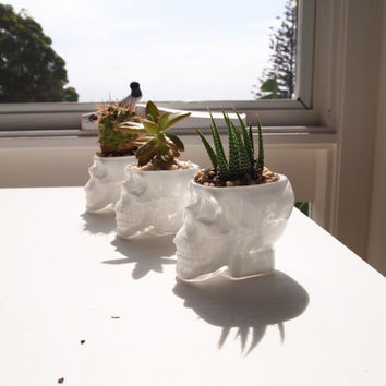 Crystal Glass White Skull Planter Garden Decor For Cactus Or Succulent Plant Holder Vase Head