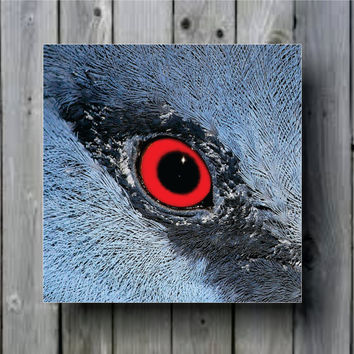 Fan-Deaf Bird Eye Macro Close Up Art Background Photo Panel - Durable Finish - High Definition - High Gloss