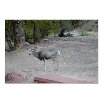 Mule Deer Zion National Park Poster