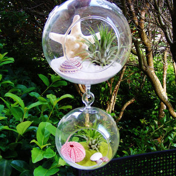 Double Glass Globe Hanging Terrarium Kits with Tillandsia  Air Plants