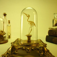 Articulated Sunbird Skeleton Under Glass Dome Upon Antique Ornate Base