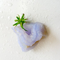 10% SALE My lil Magnet Air Plant on Special Druze India Crystal Cave Garden