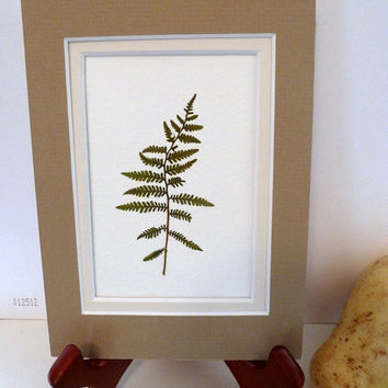 Real Pressed Fern Botanical Herbarium Specimen Art 5x7 Lady Fern