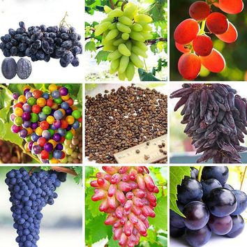 12 Different Varieties Non-GMO Grapes Fruits Seeds Home Garden Trees And Farm Bonsai Pot Seeds 120PCS