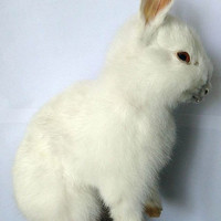 real  taxidermy bunny rabbit , birthday gift,display,free shipping to every where
