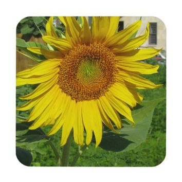 Large sunflower drink coaster