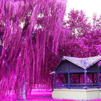 Images of Violet - Willow Tree Park 8x10  Fine Art Photography