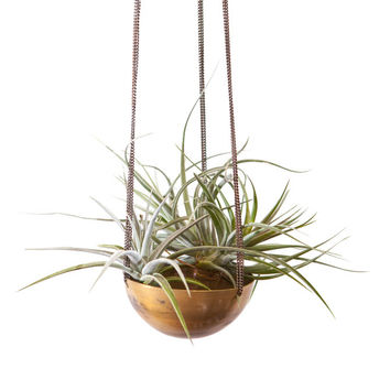 Gold Medal Hanging Planter