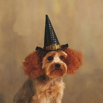"5.5"" Black and Orange Shiny Polka Dotted and Checkered Pet Animal Witches Hat and Curly Hair Halloween Costume"