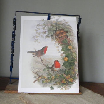 Vintage book plate print of robin parents in tree with worms for babies in nest - charming family