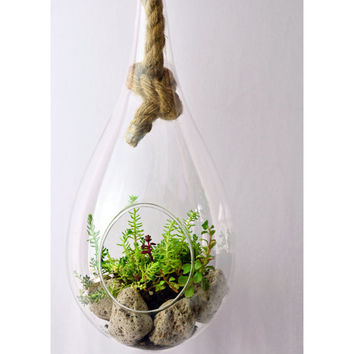 Hanging tear drop terrarium // succulent terrarium // green gift // home decor //