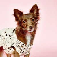 Free People Doggy Daydream Crochet Sweater