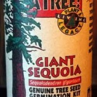 Giant Sequoia Growing Kit