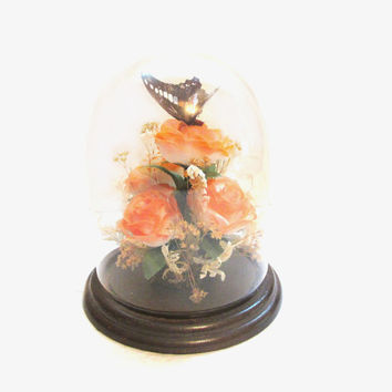 Vintage Preserved Butterfly, Glass Dome Display / Terrarium